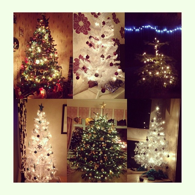 Six of our Christmas trees