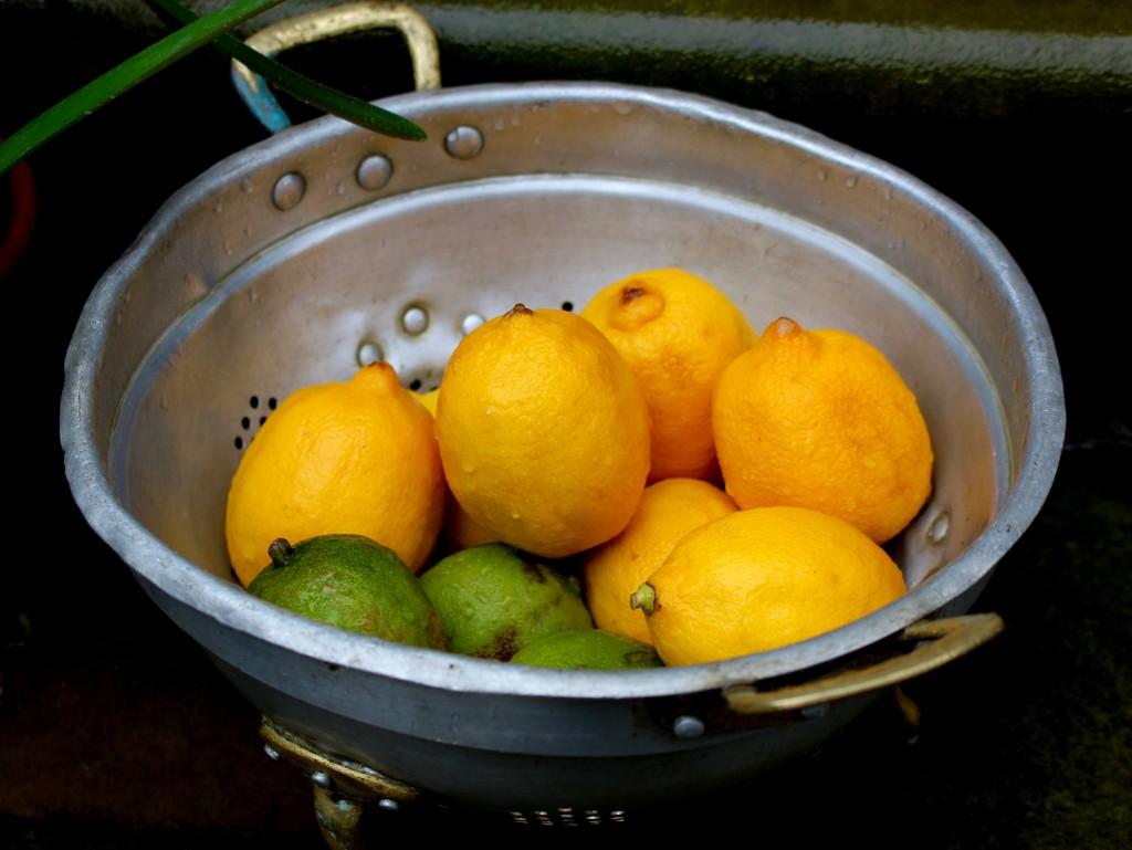 A bowl of citrus outside The Bluecoat