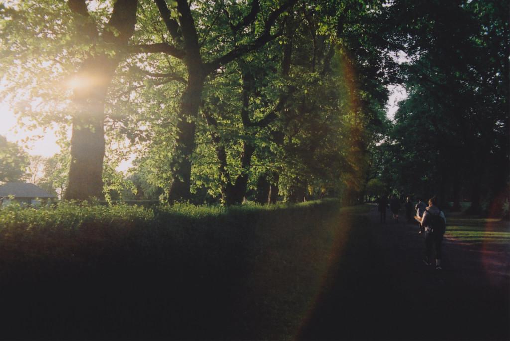 The sun creeps into the park