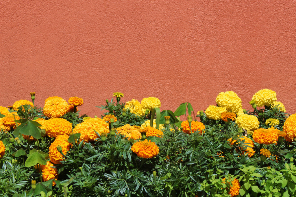 Colourful flora of Sintra