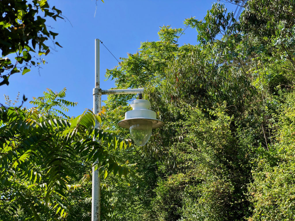 A streetlight is consumed by the foliage