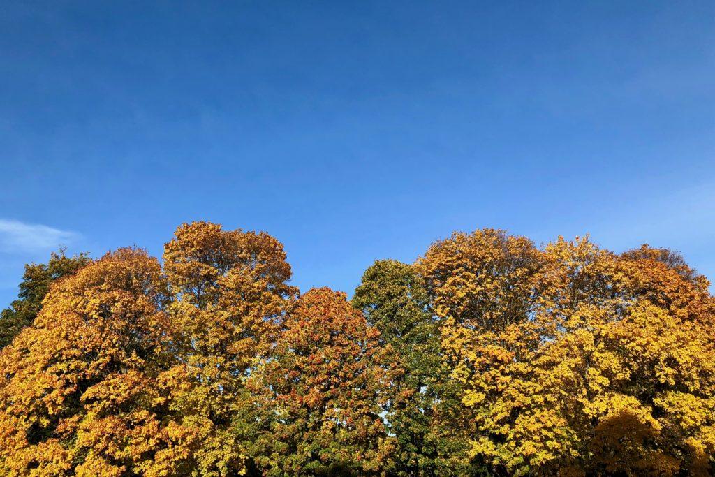 An autumnal treeline