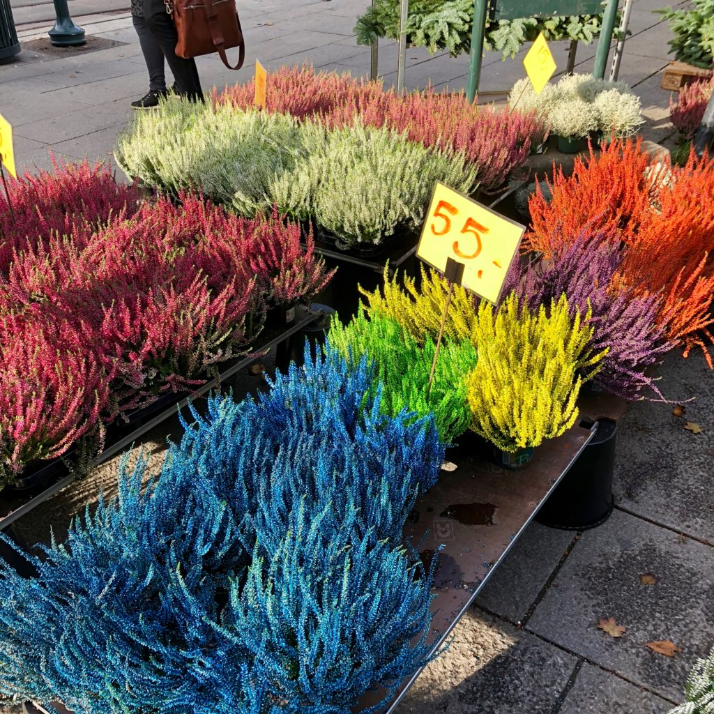 Colourful plants along the way