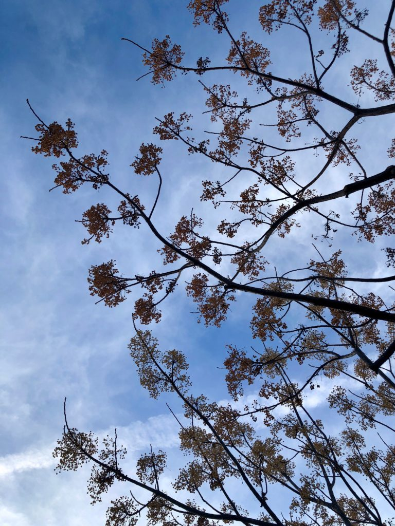 Trees against a blue sky.