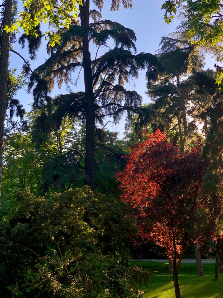 An assortment of coloured trees in Retiro Park, Madrid, as the sun sets.