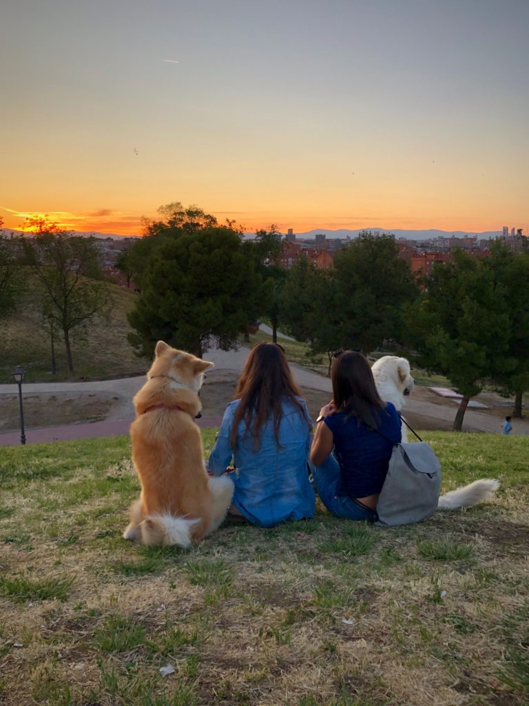 Two dogs sit with two women and watch the sun set over Madrid.