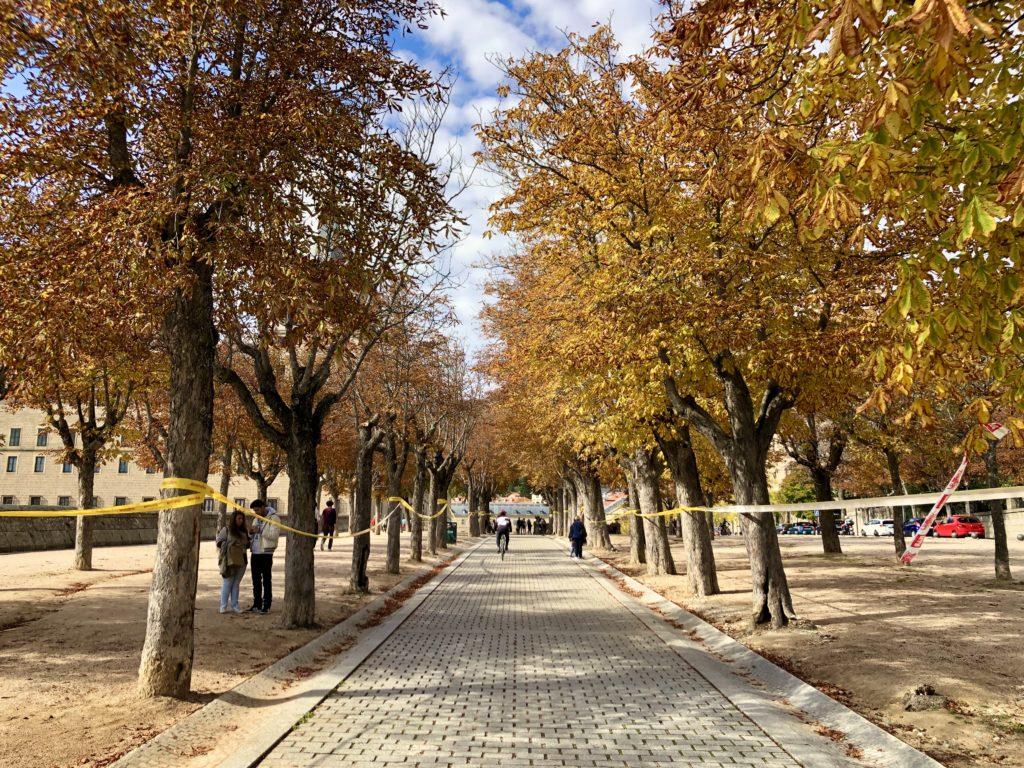 Yellow trees line a path in El Escorial.
