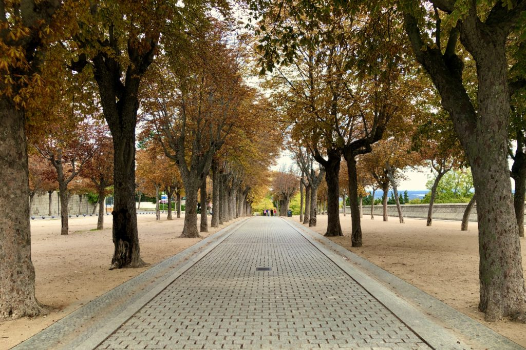 Walking back down the line of yellow trees in El Escorial.
