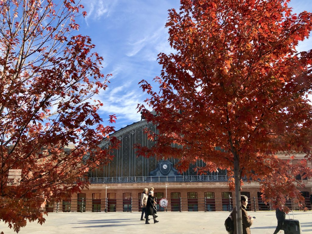 The trees outside Atocha Train Station in Madrid are bright red.