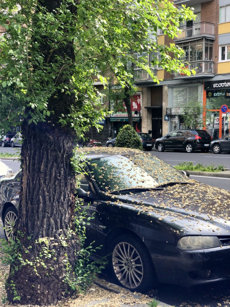 A car is covered in dead leaves in the street in Madrid, during the coronavirus lockdown.