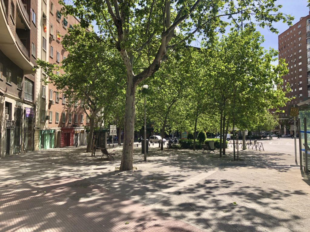 Sunlight shines through a clump of trees in a deserted Madrid during the coronavirus lockdown.