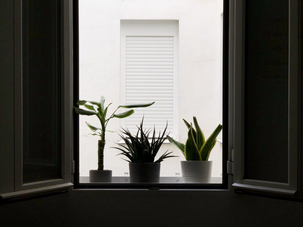 The silhouettes of three plants are seen in a window sill of my flat in Madrid.