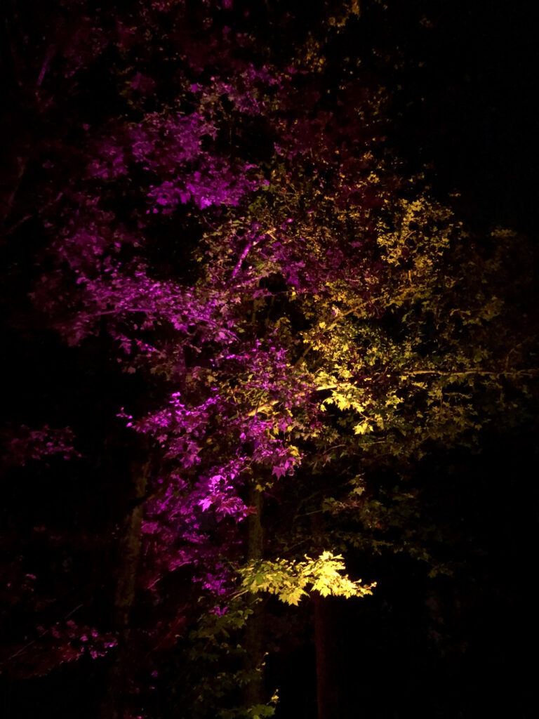A tree lit in a purple and yellow light.