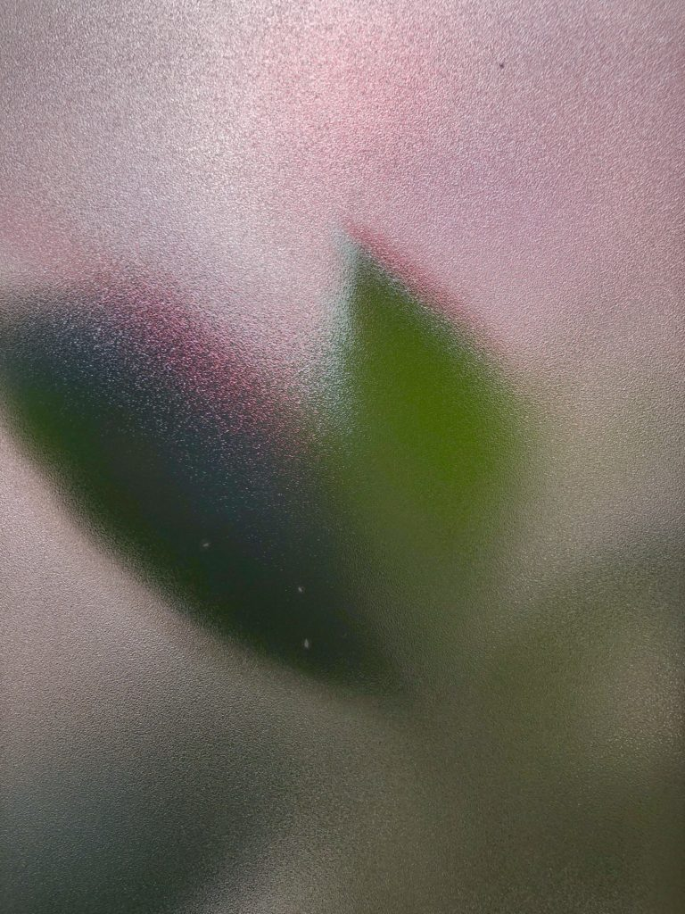 A pink glow and a green light from a leaf are shown through the frosted glass of my bathroom window.