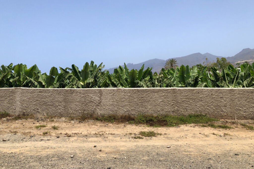 A white wall, with leafy plants behind and mountains in the background.