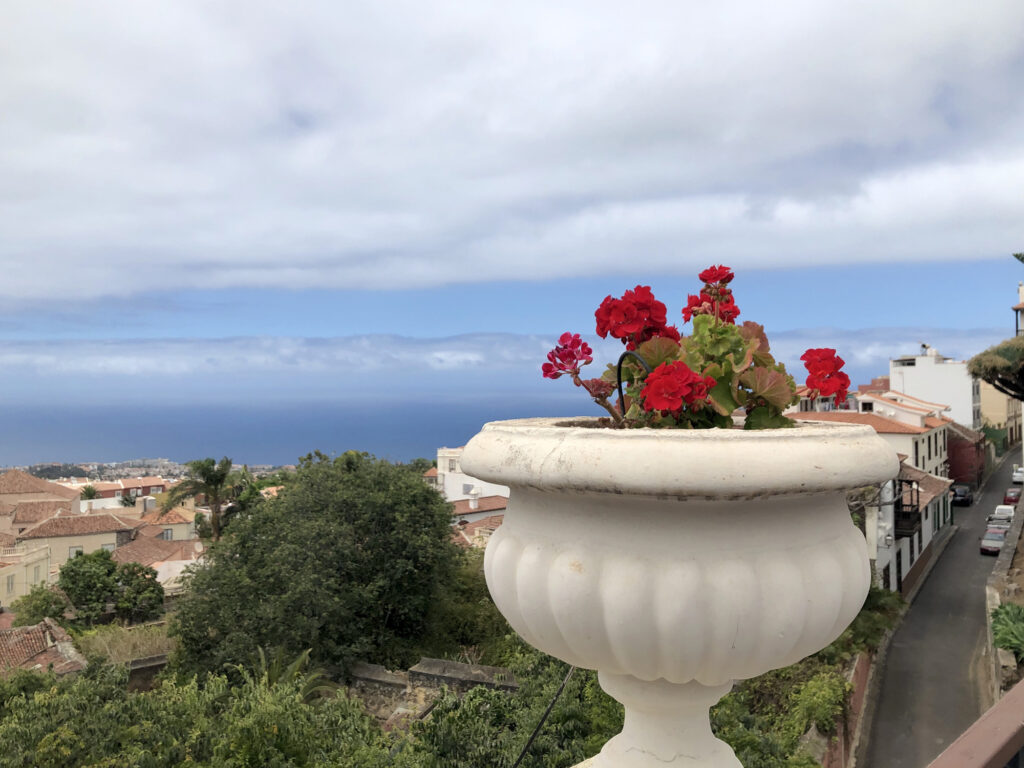 A plant pot with red flowers in the foreground, with houses, the sea and sky in the background.
