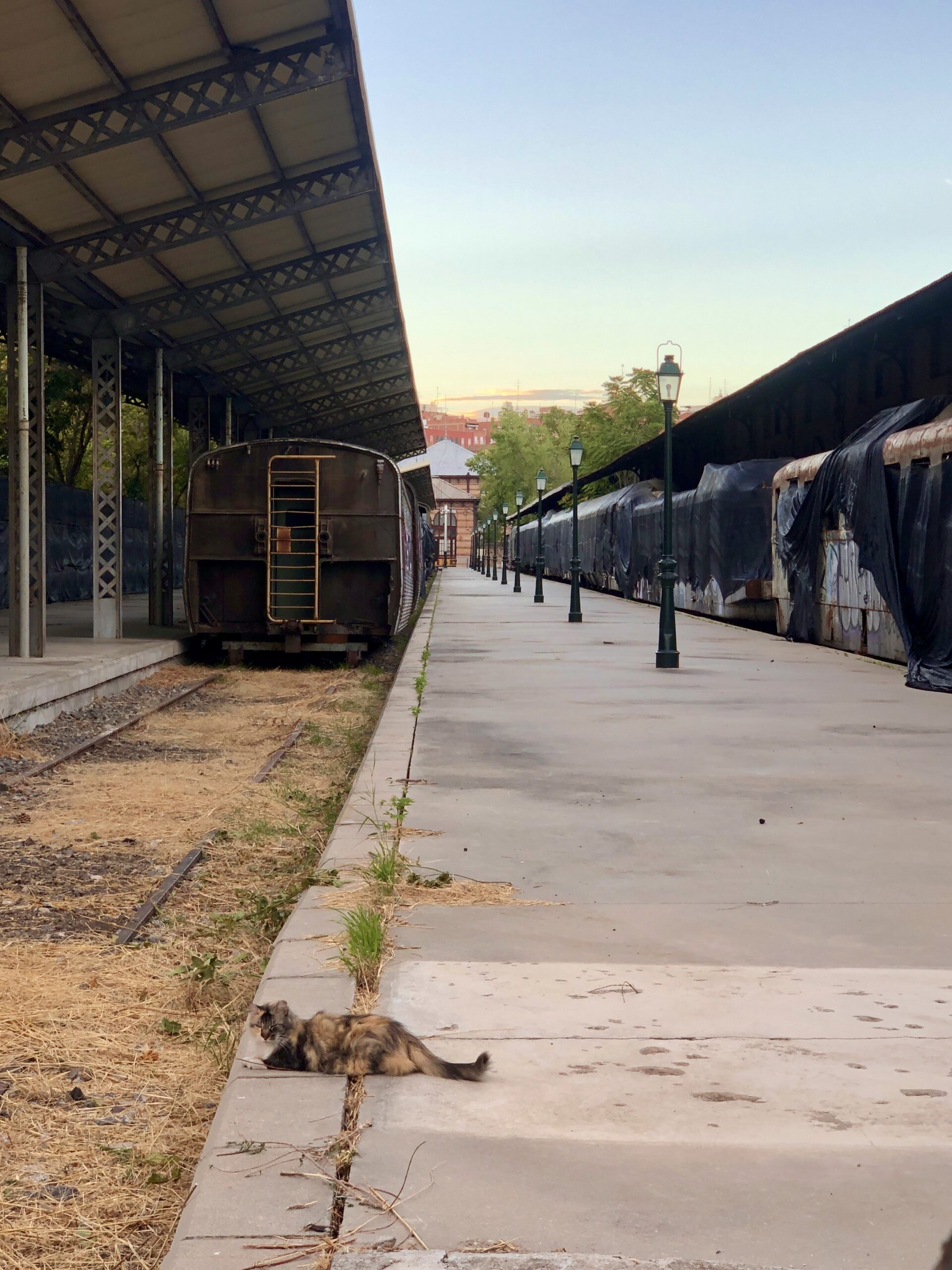 Abandoned trains in an abandoned station, with a cat in the foreground.
