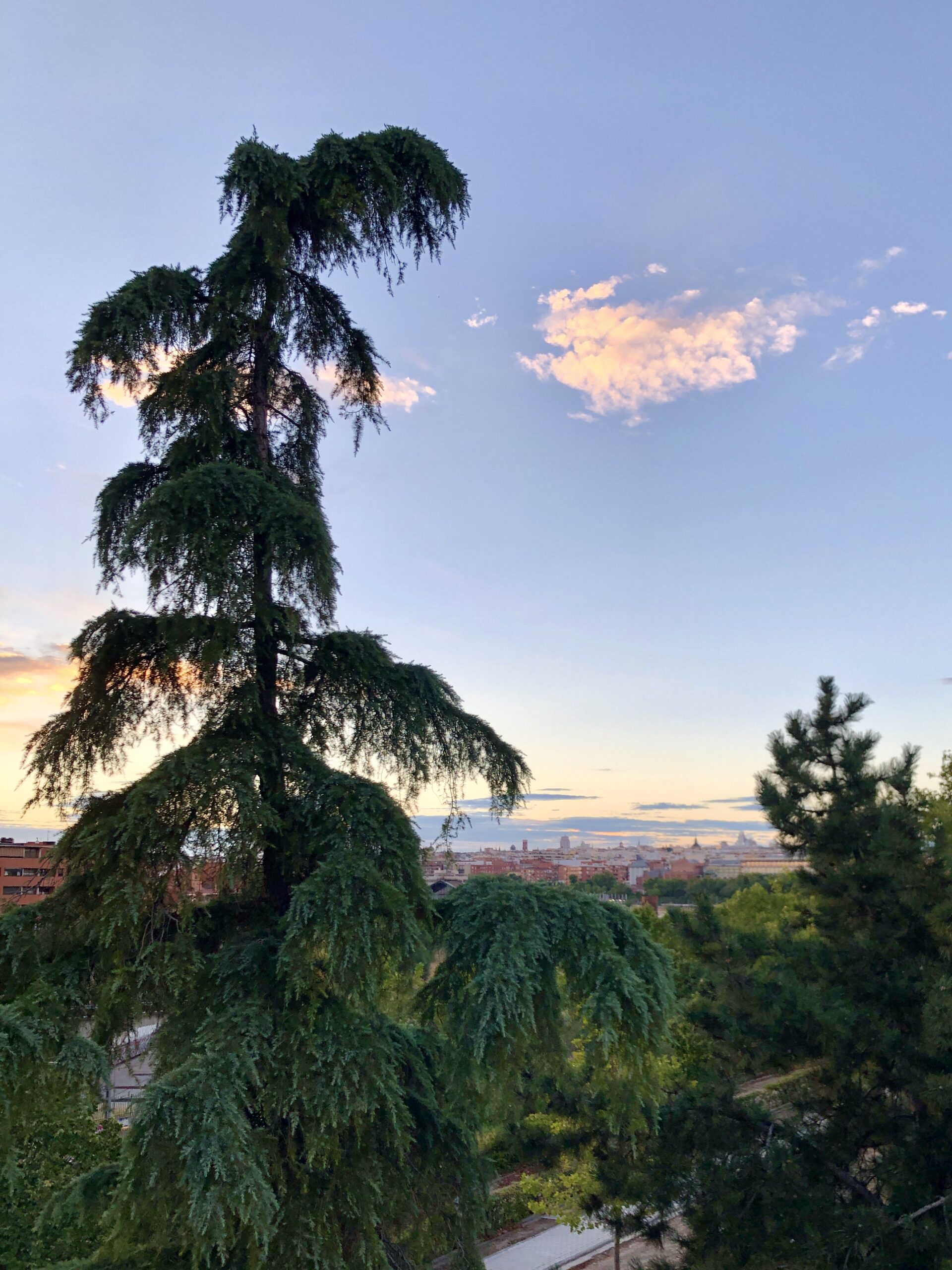 A tree in the foreground with the Madrid skyline in the background.