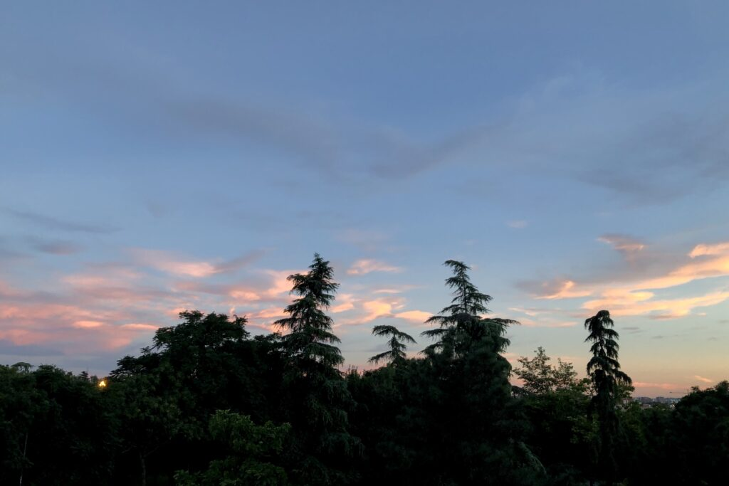 An evening sky with pink clouds over a black silhouette of trees.